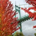A teal colored bridge in Portland, Oregon stands against a cloudy grey sky surrounded by bright red fall foliage