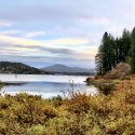 Golden shrubs surround Coeur d'Alene lake on a cloudy day
