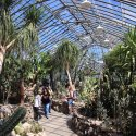 Inside of the Belle Isle Conservatory with plants and people walking through.
