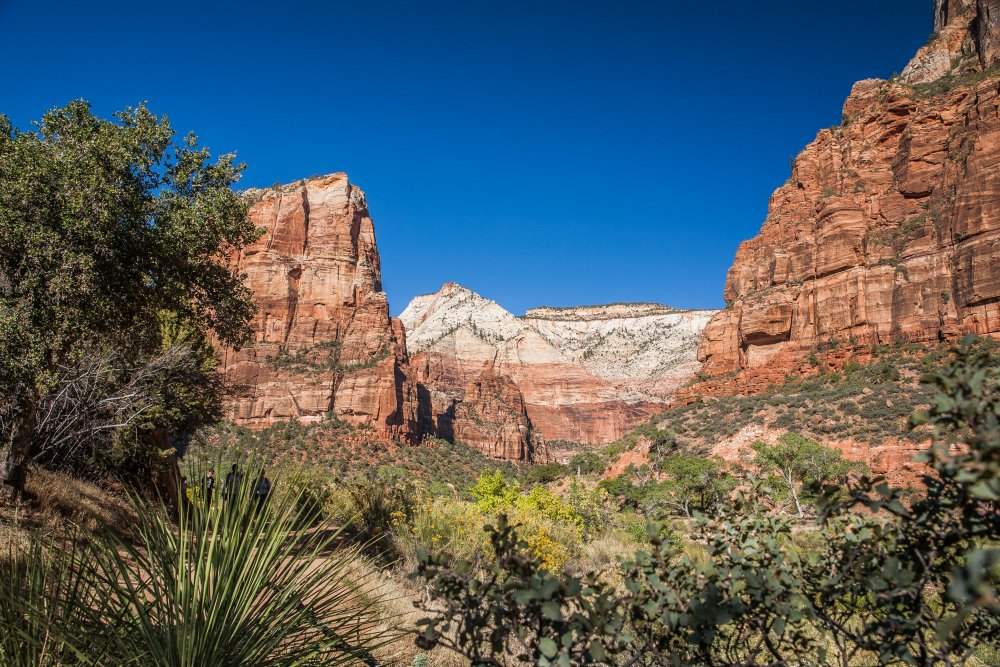 Plantlife in Zion National Park