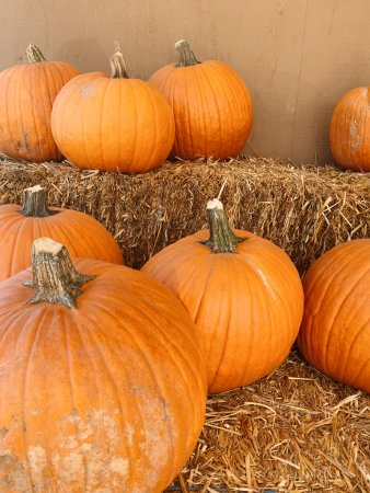 Eight pumpkins placed atop hay bales at Mountain Valley Ranch in Ramona, California.