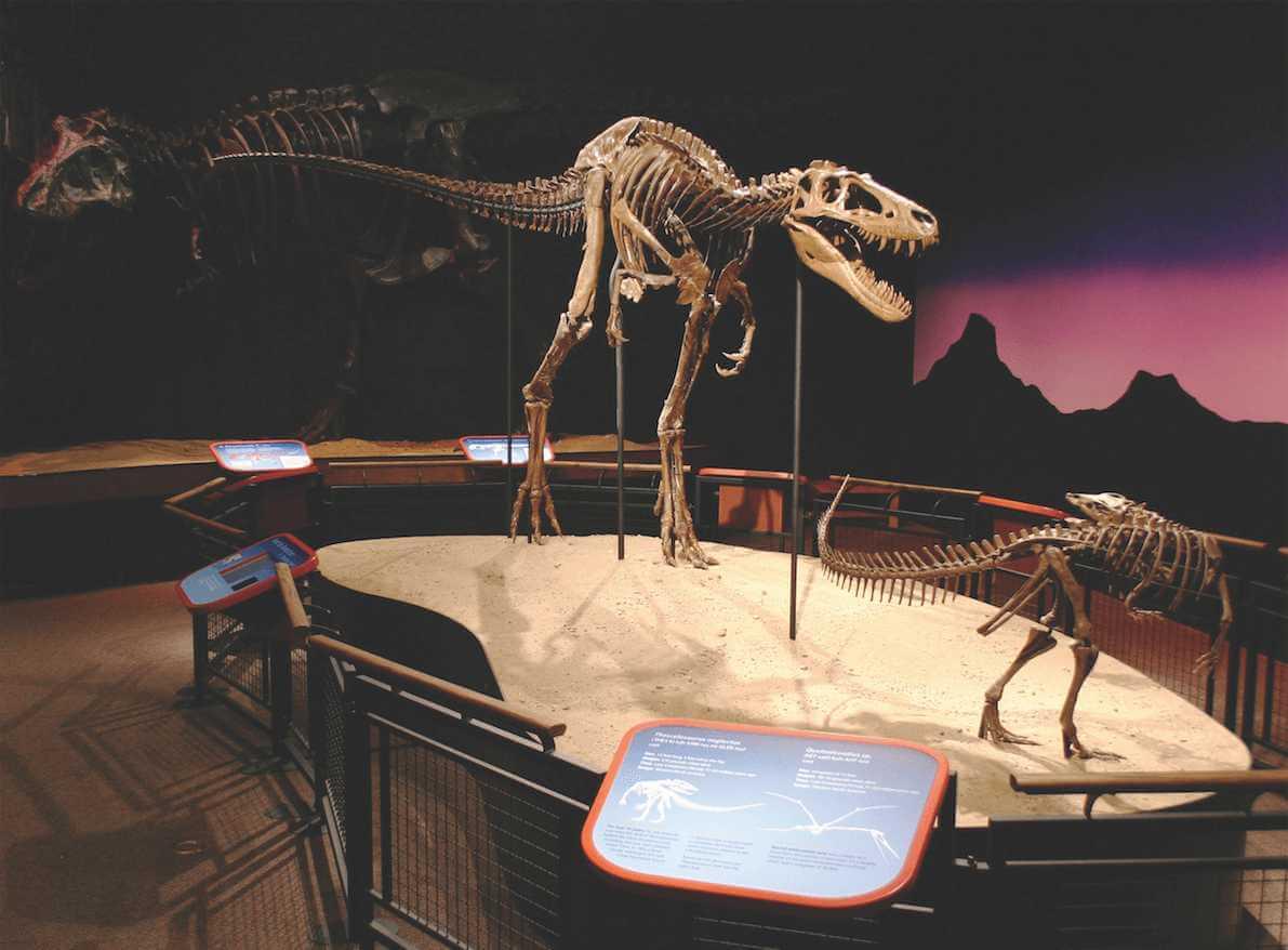 Dinosaur skeleton display at Burpee Museum of Natural History in Rockford, IL.