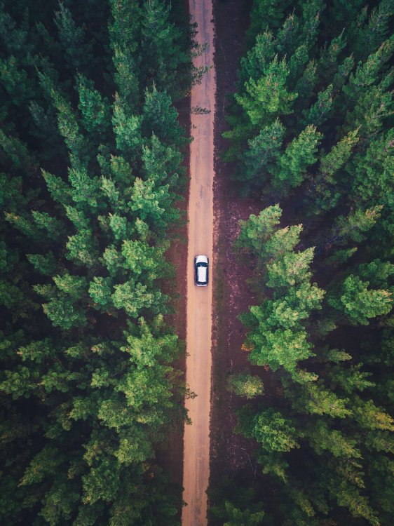 Top down image of car traveling along dirt road flanked by trees.