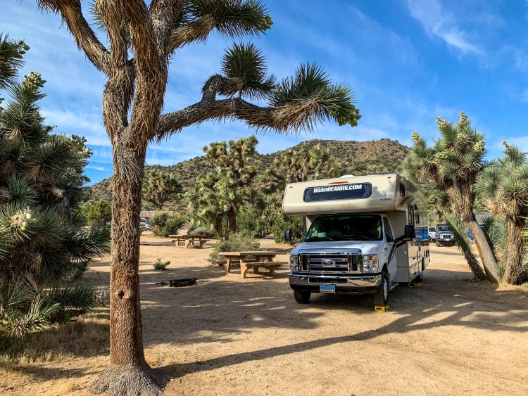 RV parked on dirt campsite shaded by Joshua Trees